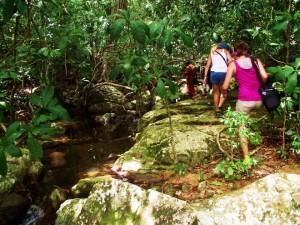 Wildlife Tracking-Madagaskar