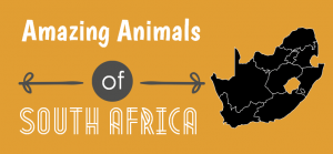 Amazing Animals of South Africa - Header