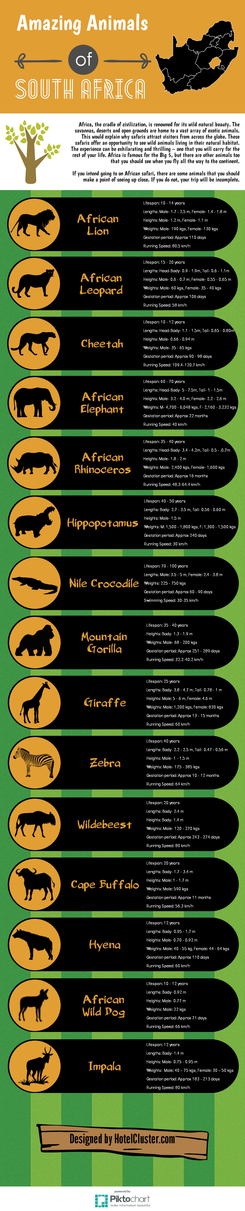 big seven and other animals of africa   infographic